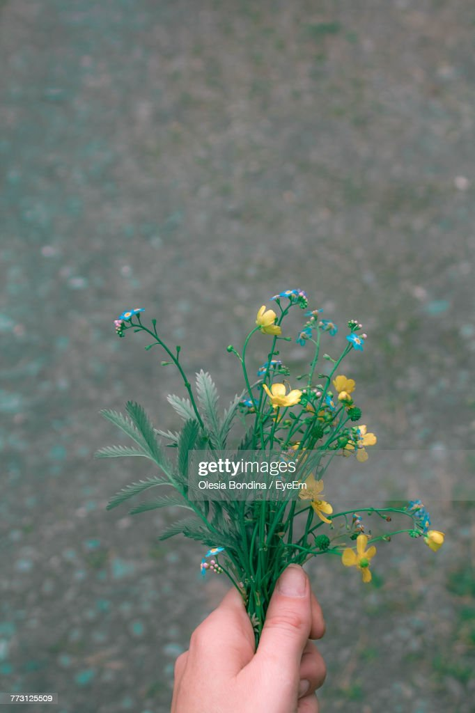 Close-Up Of Hand Holding Flowers : Photo