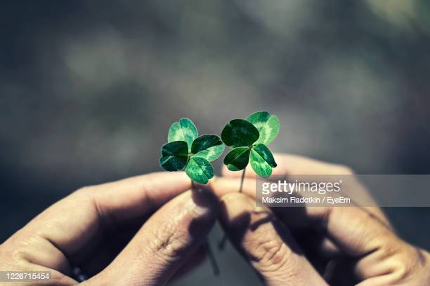 close-up of hand holding four leaf clover - medallist stock pictures, royalty-free photos & images