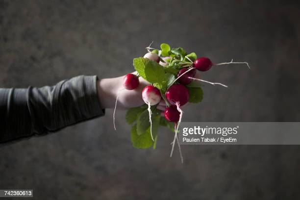 close-up of hand holding fresh radish - paulien tabak stock pictures, royalty-free photos & images