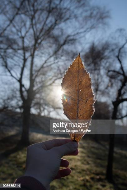 Close-Up Of Hand Holding Frozen Leaf
