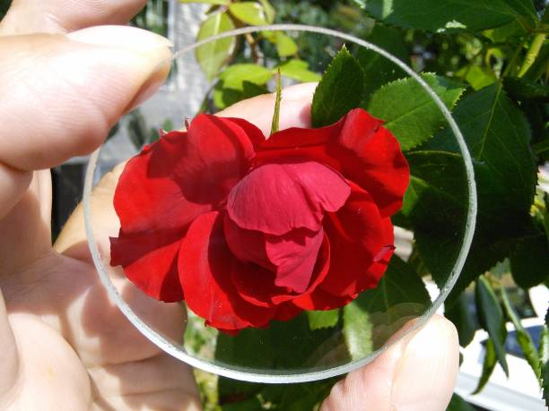 Close-Up Of Hand Holding Glass Against Red Flowers