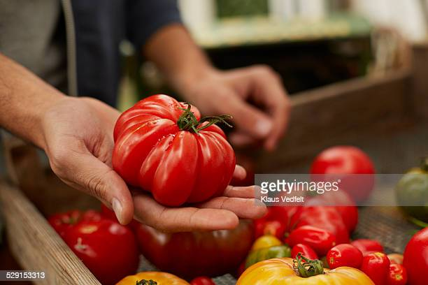 close-up of hand holding huge raf tomato - tomate photos et images de collection
