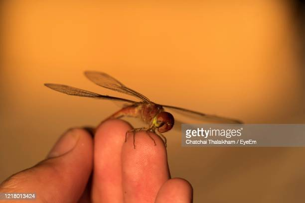 close-up of hand holding insect - chatchai thalaikham stock pictures, royalty-free photos & images