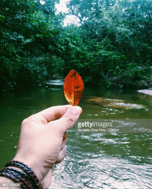 close-up of hand holding leaf against river - filho stock pictures, royalty-free photos & images