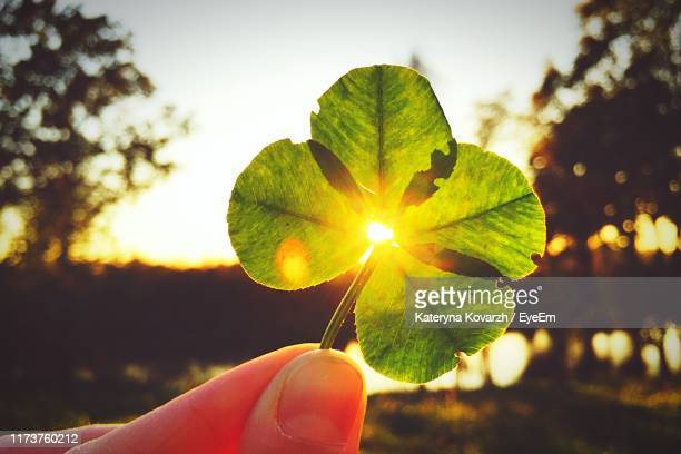 close-up of hand holding leaf against sky during sunset - クローバー ストックフォトと画像