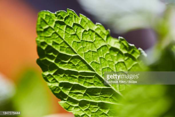 close-up of hand holding leaf - klein stock pictures, royalty-free photos & images