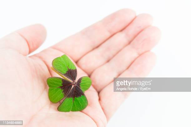 close-up of hand holding leaves over white background - angela rohde stock-fotos und bilder