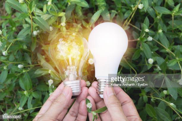 close-up of hand holding light bulbs over plants - led light stock pictures, royalty-free photos & images