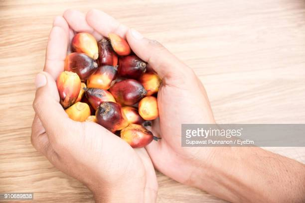 Close-Up Of Hand Holding Oil Palm Fruit