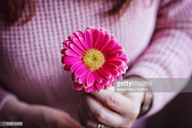 close-up of hand holding pink flower - province of caltanissetta stock photos and pictures