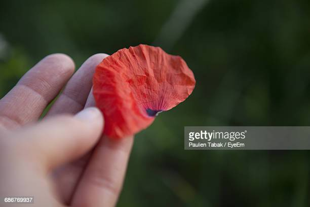 close-up of hand holding pink flower - paulien tabak foto e immagini stock