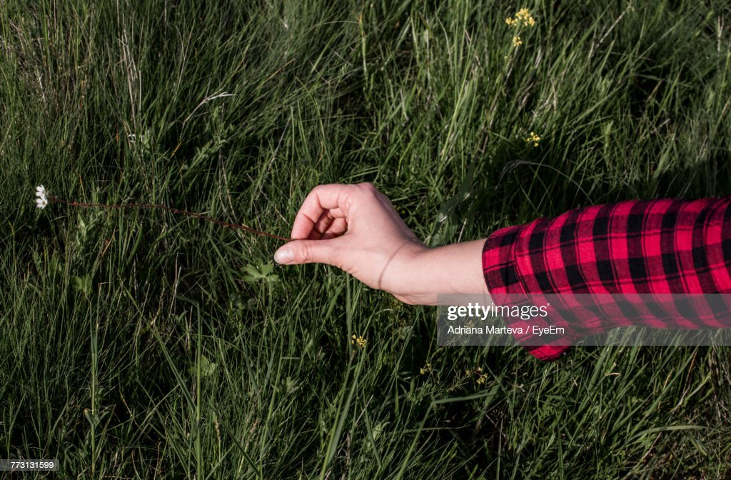 Close-Up Of Hand Holding Plant In Field : Foto de stock