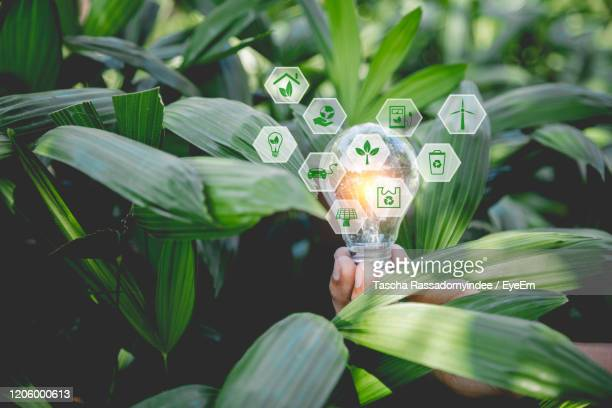 close-up of hand holding plant light bulb ecology concept. - earth day stock pictures, royalty-free photos & images