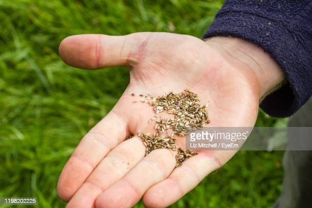close-up of hand holding seed against grassy land - gras stock pictures, royalty-free photos & images