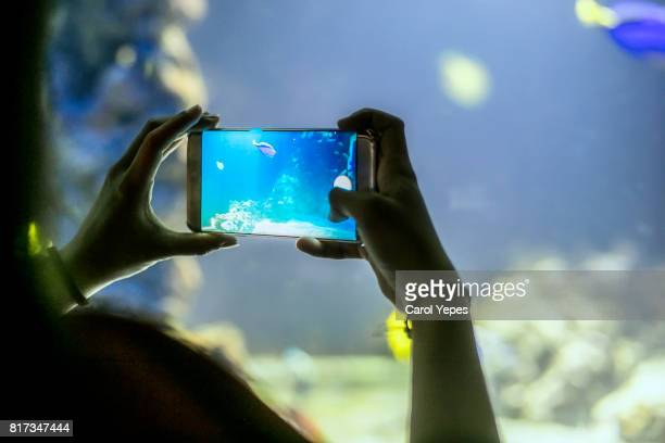 Close-Up Of Hand Holding Smart Phone  taking pictures of an aquarium