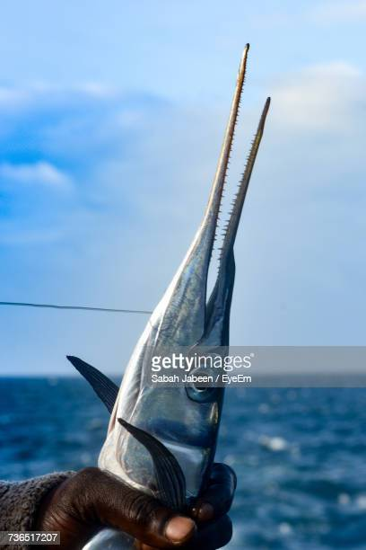 close-up of hand holding swordfish by sea - swordfish stock pictures, royalty-free photos & images