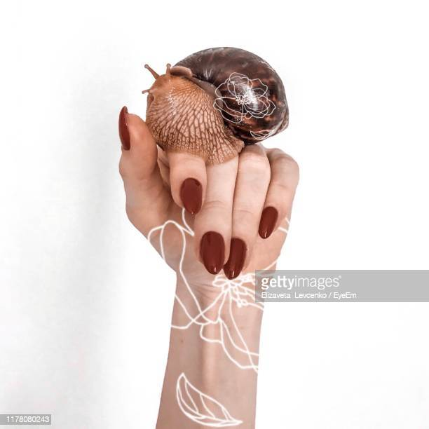 close-up of hand holding with snail against white background - giant african land snail stock pictures, royalty-free photos & images