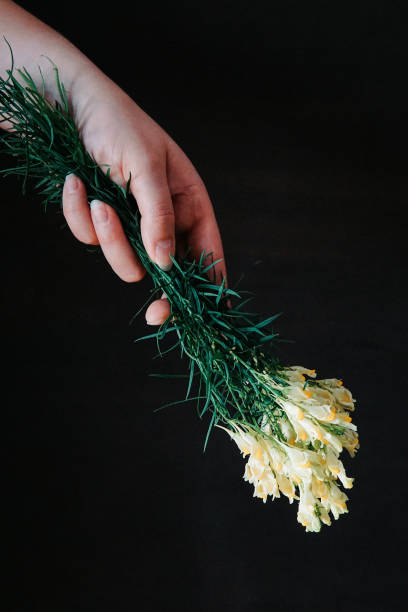 Close-Up Of Hand Holding Yellow Wild Bouquet Against Black Background