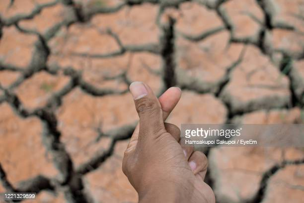 close-up of hand on field - hamsakupoi stock pictures, royalty-free photos & images