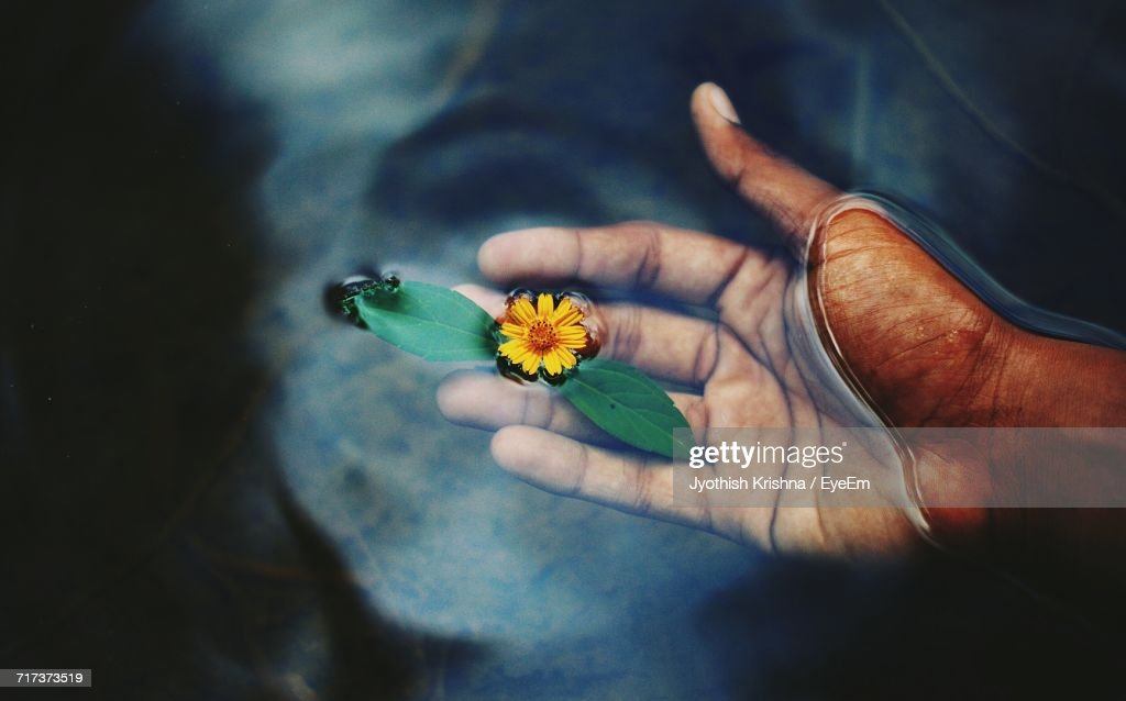 Close-Up Of Hand On Flower : Stock Photo