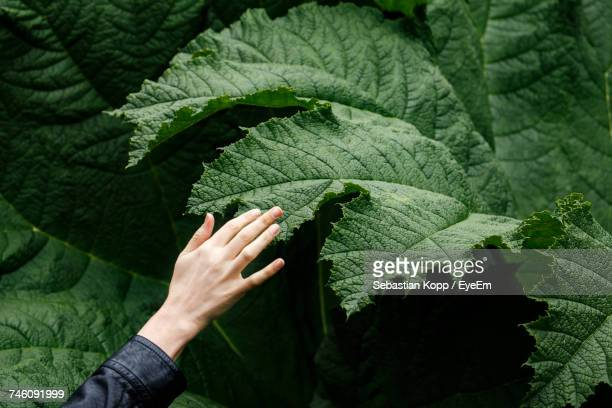 close-up of hand on leaf - curiosity stock photos and pictures