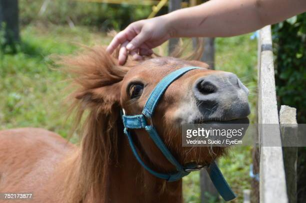 Close-Up Of Hand Stroking Horse