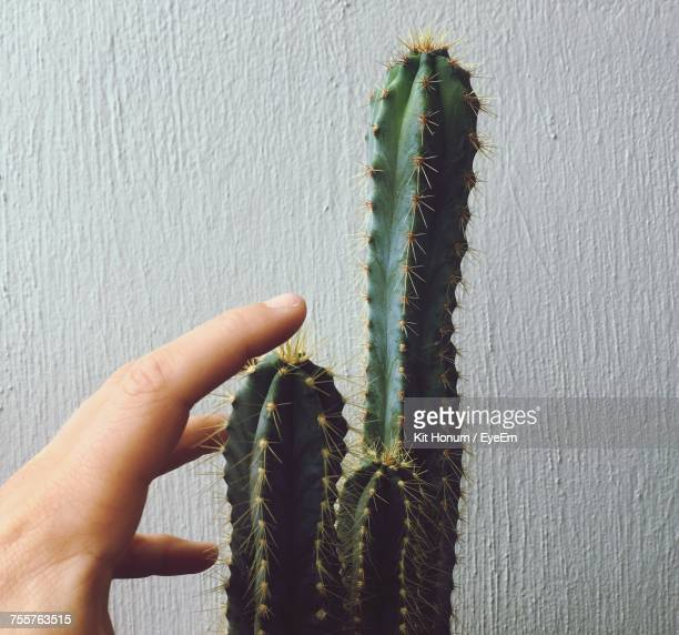 Close-Up Of Hand Touching Cactus