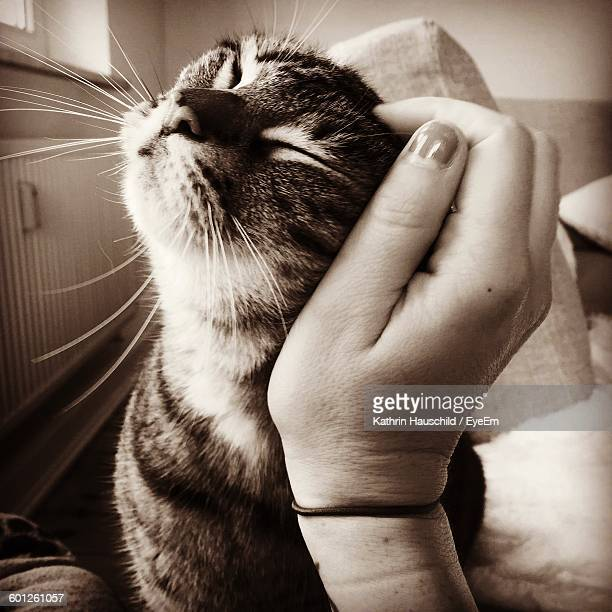 Close-Up Of Hand Touching Cat At Home