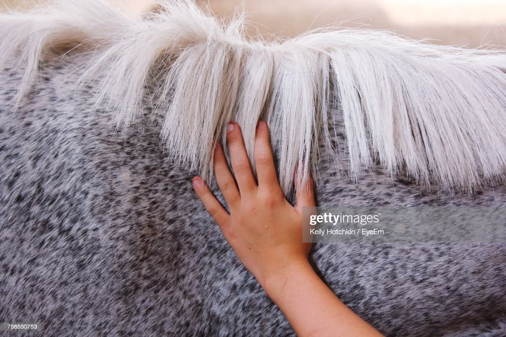 Close-Up Of Hand Touching Horse : Stock-Foto