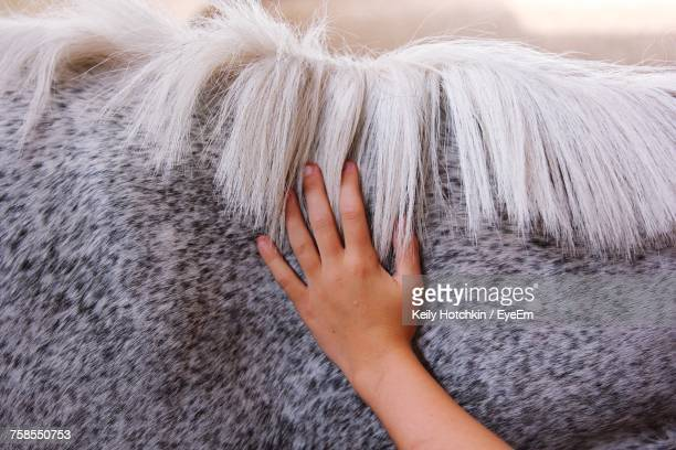 Close-Up Of Hand Touching Horse