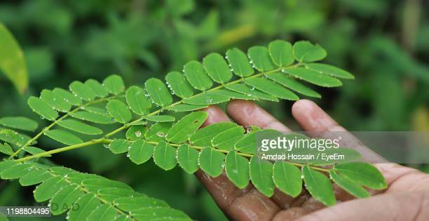 close-up of hand touching leaf - amdad hossain stock pictures, royalty-free photos & images