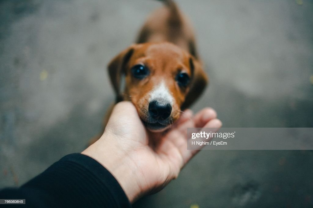 Close-Up Of Hand Touching Puppy : Stock Photo