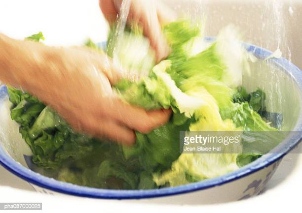 Close-up of hand washing lettuce.