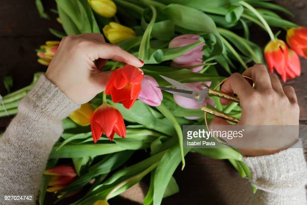 Close-Up Of Hands Cutting Tulips
