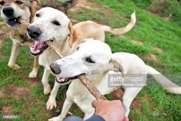 Close-Up Of Hands Holding Dog