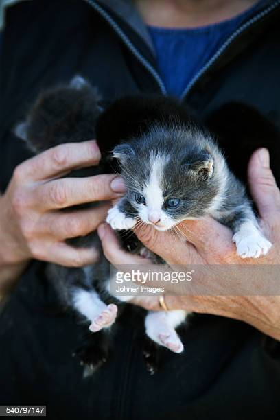 Close-up of hands holding kittens