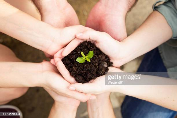 close-up of hands of friends holding a young plant - 苗 ストックフォトと画像