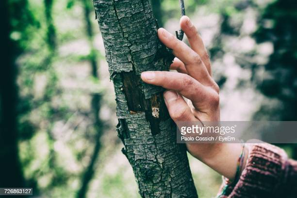 Close-Up Of Hands On Tree