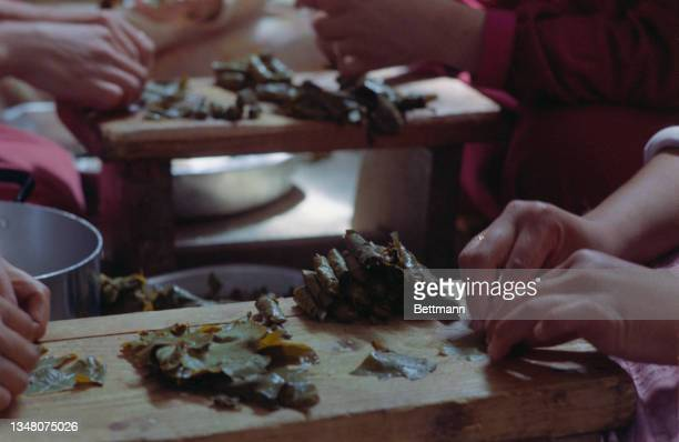 Close-up of hands preparing dolma, stuffed vine leaves, on a wooden board, with more hands at work on another board in the background, in an...