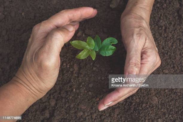 close-up of hands shielding small plant - shielding stock pictures, royalty-free photos & images