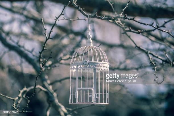 Close-Up Of Hanging Birdcage On Tree
