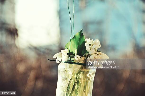 Close-Up Of Hanging Jar With Flower And Leaf