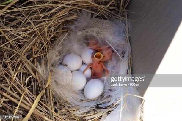 close-up of hatching two birds - 動物の親子 ストックフォトと画像
