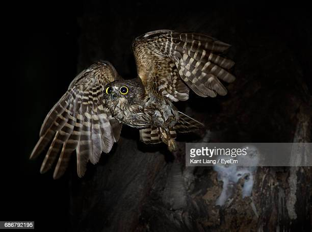 close-up of hawk owl leaving chicks in nest - hawk nest stock photos and pictures
