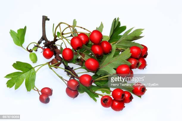 Close-Up Of Hawthorn Berries