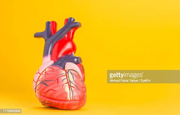 close-up of heart model against yellow background - cardiovascular system stock pictures, royalty-free photos & images