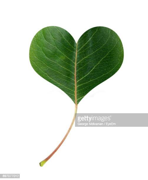 Close-Up Of Heart Shape Leaf Over White Background