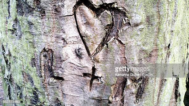 close-up of heart shape made on tree trunk - katharina herz stock-fotos und bilder