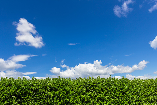 Close-Up Of Hedge Against Blue Sky - gettyimageskorea