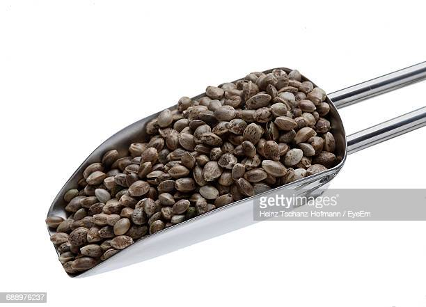 close-up of hemp seeds against white background - hemp seed stock photos and pictures